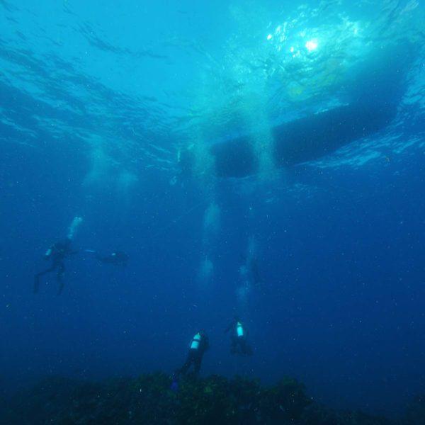 Mange dykkere under vann og under båten